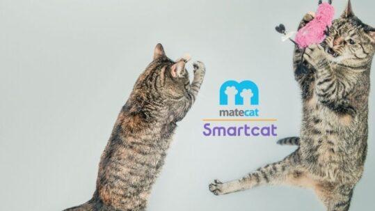 Grafica con loghi di MateCat e SmartCat