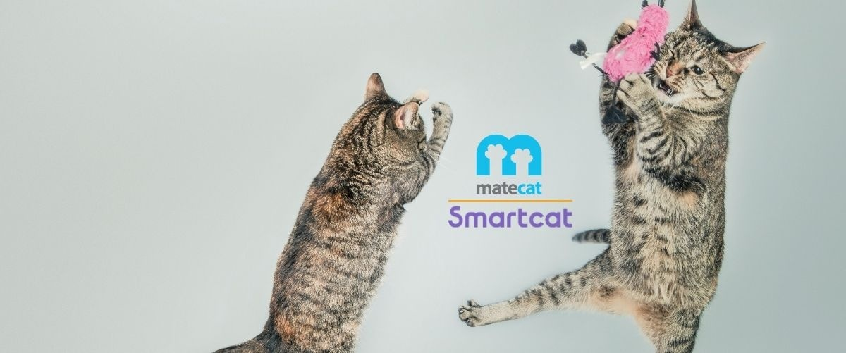 Cat tool gratuiti: Matecat e Smartcat